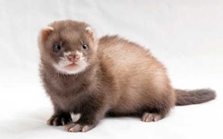 Don't be a weasel.