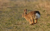 Run Rabbit, Run