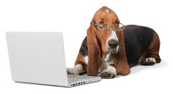 Is this dog an employee or a freelancer?